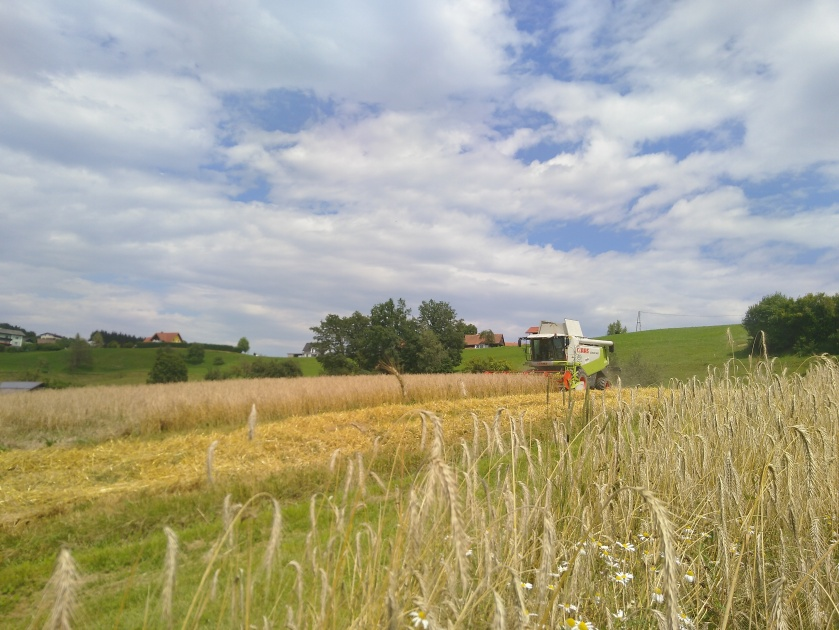 Getreideernte (2)
