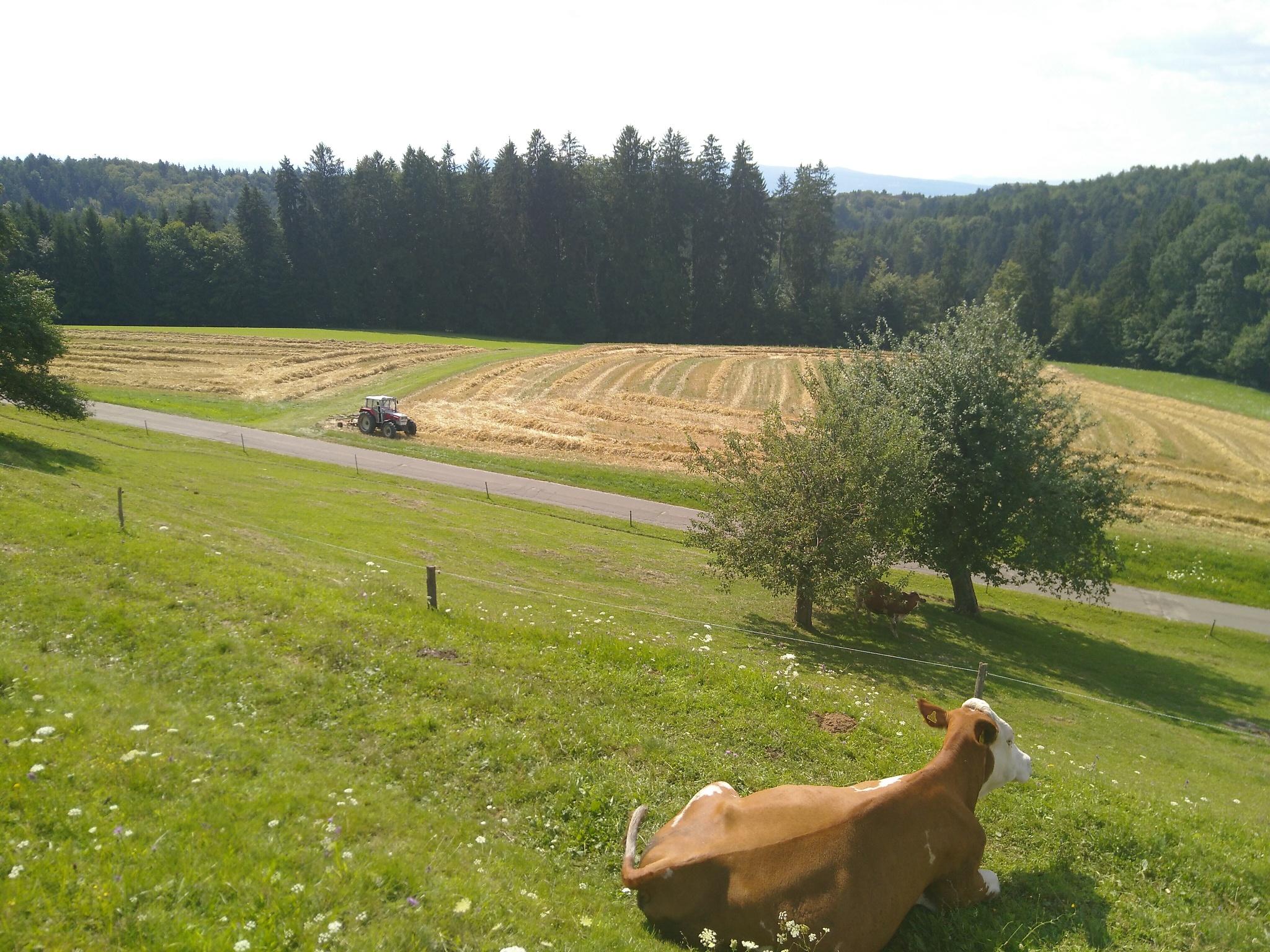 Getreideernte (4)