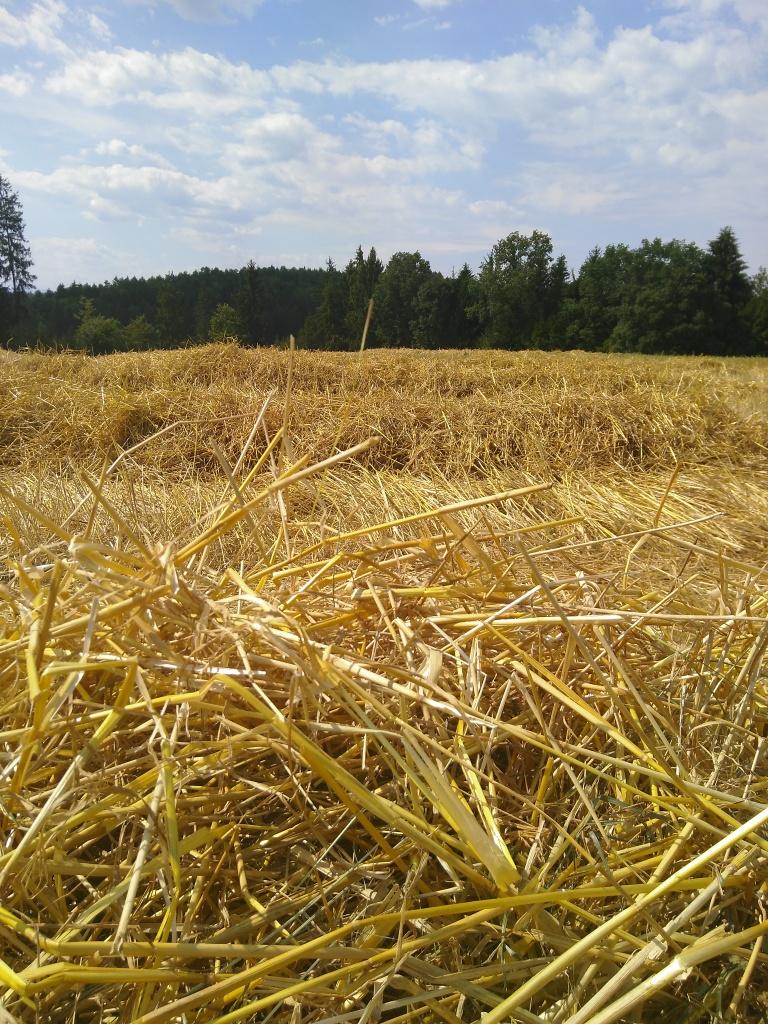 Getreideernte (6)