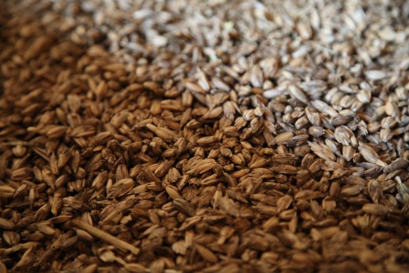 Getreideernte (7)