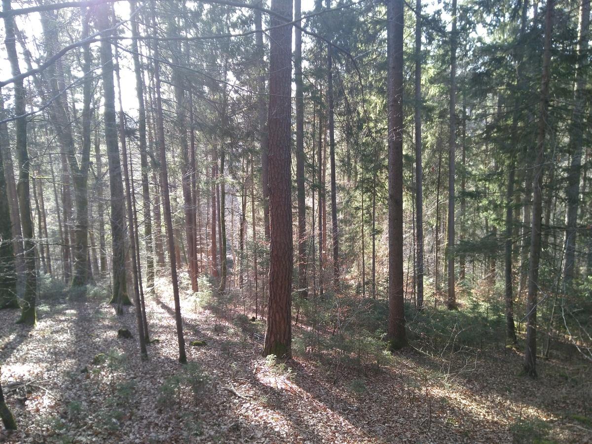 Die Waldarbeit