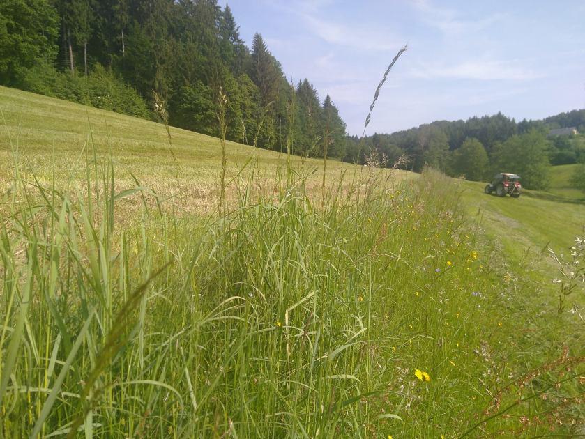 Abgestufter Wiesenbau