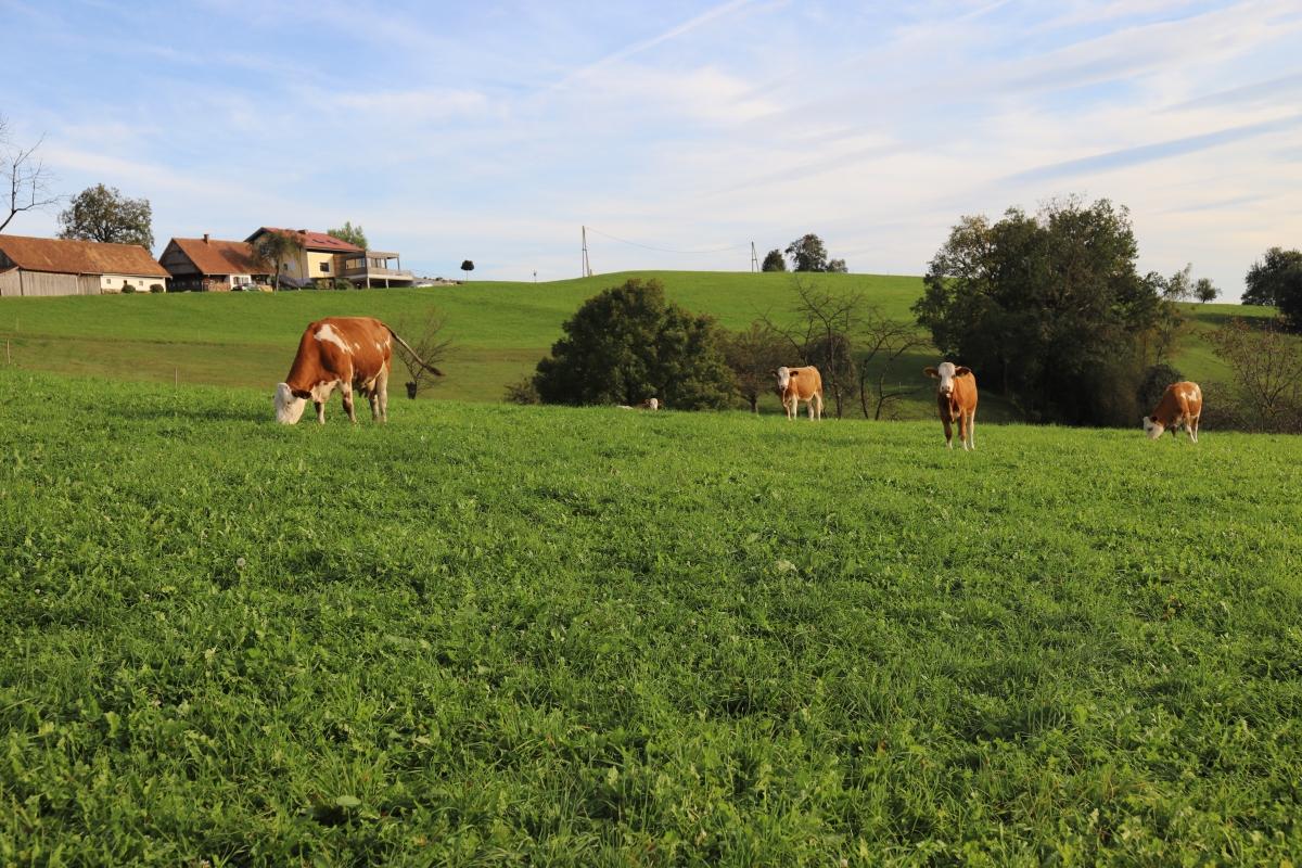 Warum wir tierische Lebensmittel erzeugen undessen.