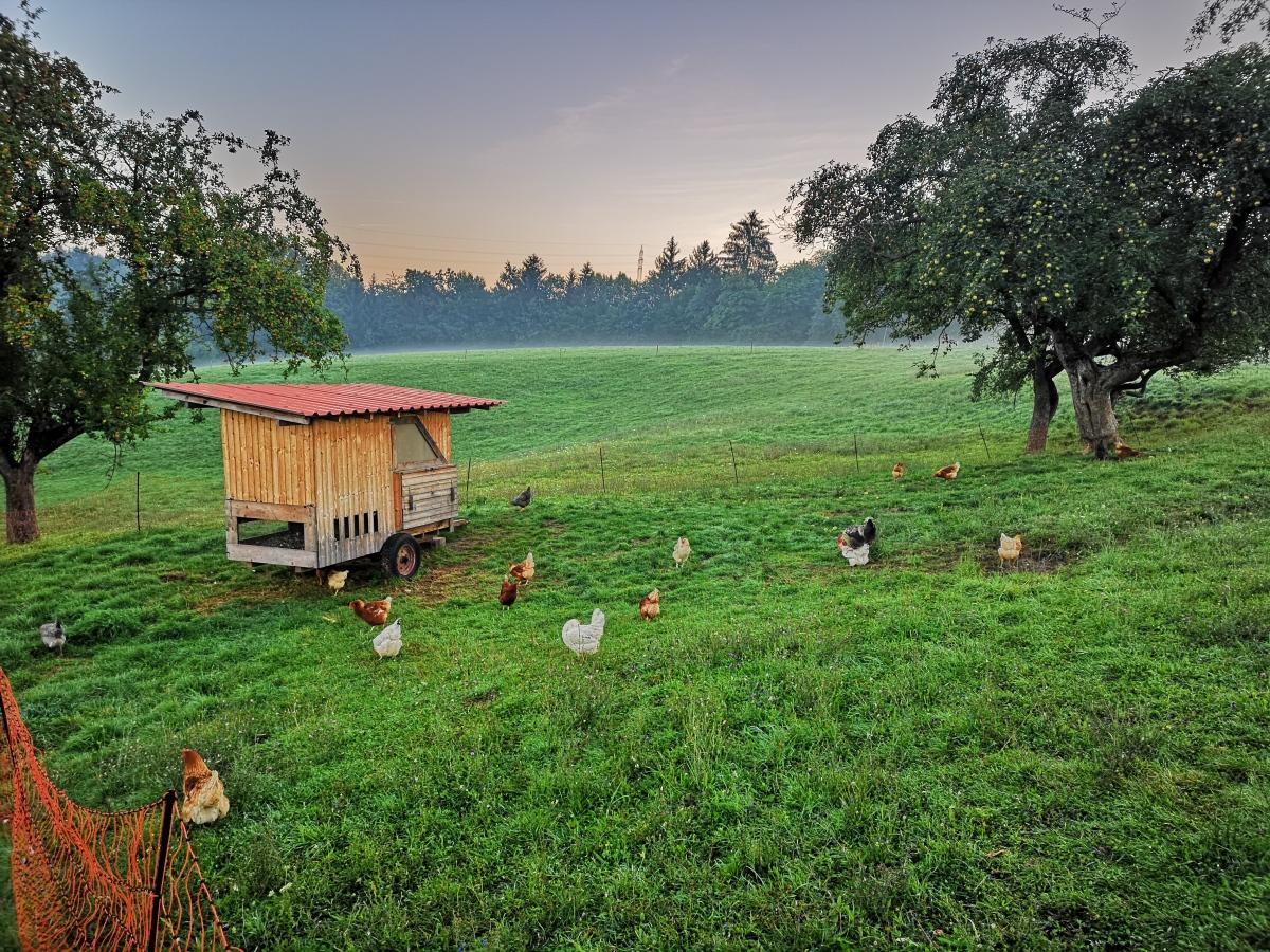Die Hühnerhaltung im mobilenStall.